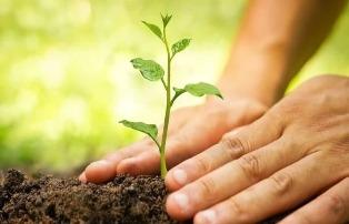 CNBB convida os brasileiros a plantarem uma árvore em memória dos que se foram